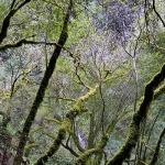 Slow, Tree Crossing