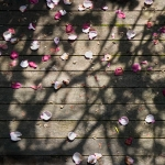 Petals on Deck 1768