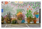 kirk3-plants