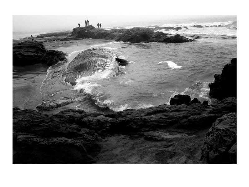 hillebrand_cal-landscapes_bean-hollo-beach-15