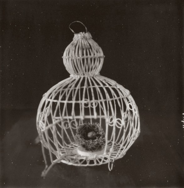 Cage and Nest, Heather Polley