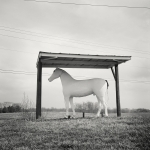 Whitehorse_1_1500px