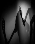 ShadowsInTheMuseum2