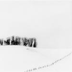 Fence and Trees, Study 1, Hokkaido, Japan 2017