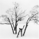 Two Trees, Study 4, Lake Kusshard, Hokkaido, Japan 2017