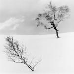 Two Trees, Studi 1, Lake Kusshard, Hokkaido, Japan 2017