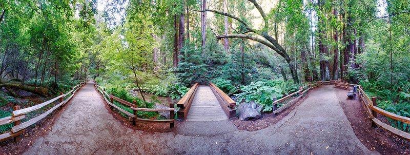 Muirwoods Bridge, Eric Larson