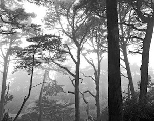 02-Mitsu-Trees